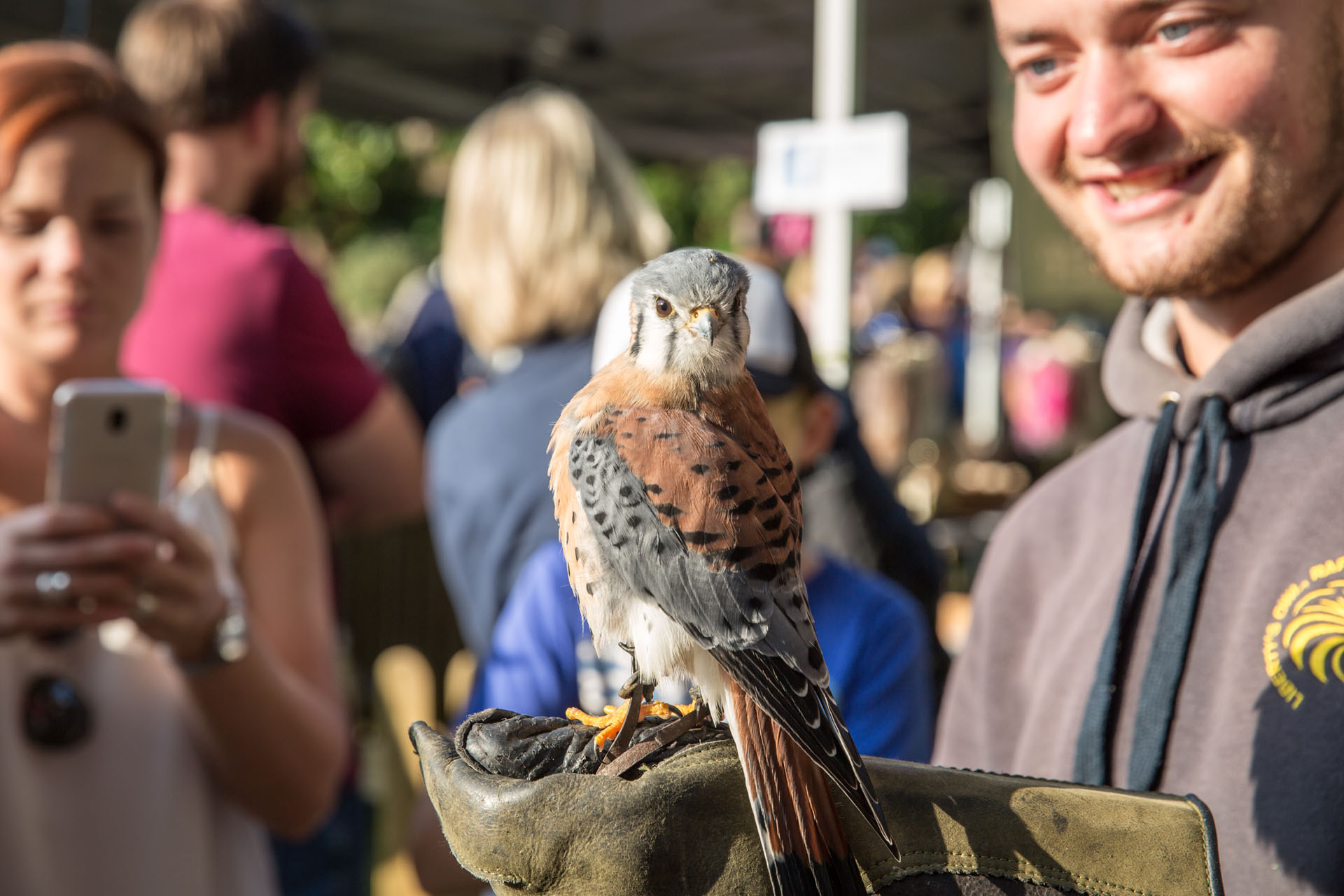 Visitor with Bird of prey on their hand